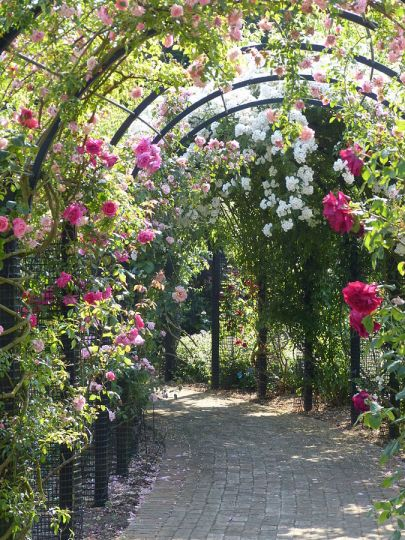 Rose_Arch.JPG